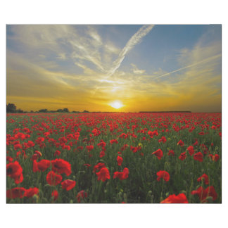 Beautiful poppy flower field sunset wrapping paper