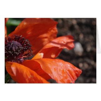 Beautiful Poppy Greeting Card