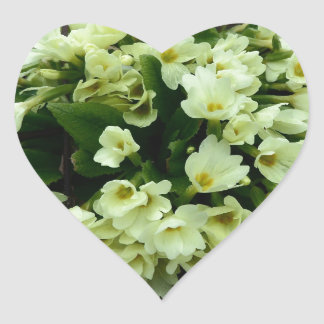Beautiful Primula vulgaris Primroses in dry leaves Heart Sticker