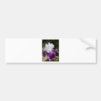 Beautiful Purple and White Iris Design Bumper Sticker