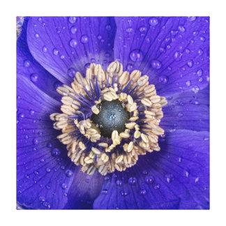 Beautiful Purple Anemone Cavas Canvas Print