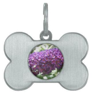 Beautiful Purple Buddleia Flowers Pet Tag