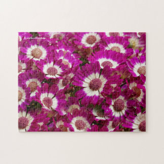 Beautiful Purple Cineraria Flowers Puzzles