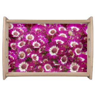 Beautiful Purple Cineraria Flowers Serving Tray