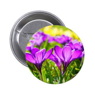 Beautiful purple crocus flowers 6 cm round badge