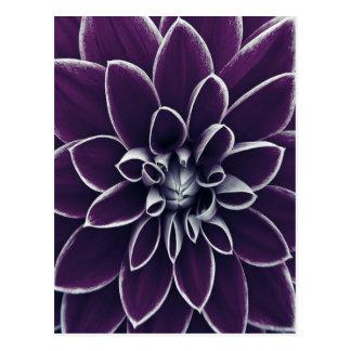 Beautiful Purple Floral Postcard