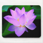 Beautiful purple lotus flower in water mouse mat