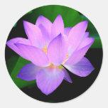 Beautiful purple lotus flower in water round stickers