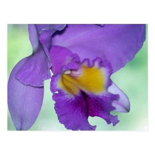 Beautiful purple orchid flower postcard