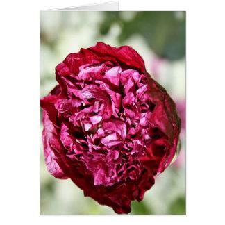 Beautiful Purple Papaver  Peony  Poppy Card