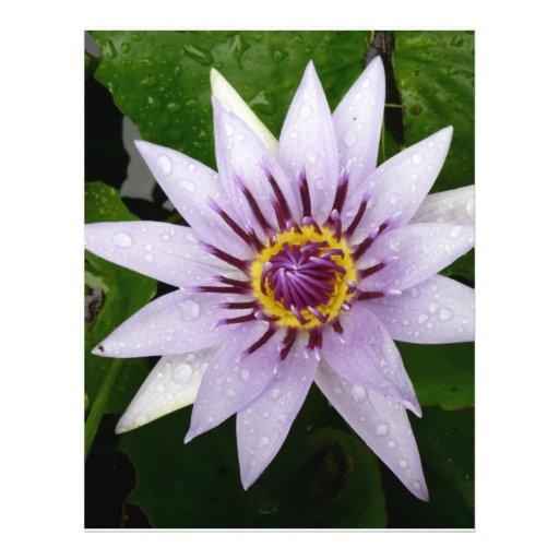 Beautiful Purple Water Lily Flyer