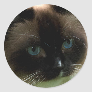 Beautiful Ragdoll Cat Round Sticker
