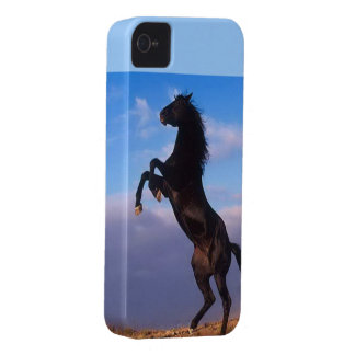 Beautiful rearing black horse with blue sky photo Case-Mate iPhone 4 case