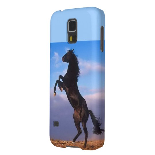 Beautiful rearing black horse with blue sky photo