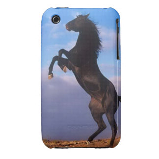 Beautiful rearing black horse with blue sky photo iPhone 3 Case-Mate case