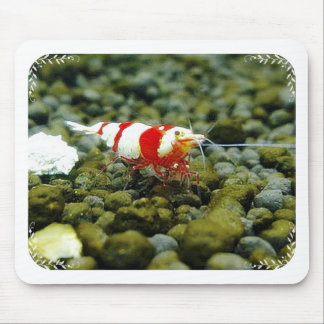 Beautiful Red Bee Shrimp Gift shop Mouse Pad