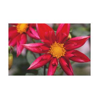 Beautiful red dahlia canvas print