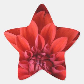 Beautiful red dahlia flowers star sticker