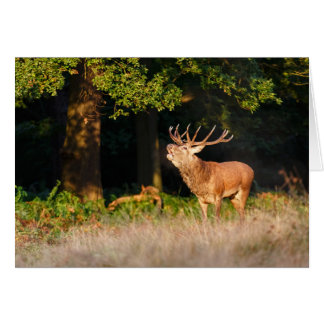 Beautiful Red Deer Stag Greeting Card