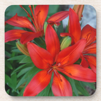 Beautiful Red Flower Coaster