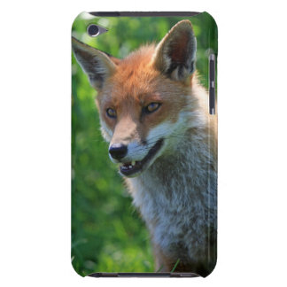 Beautiful red fox photo ipod touch 4G case Barely There iPod Cover