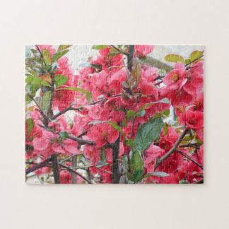 Beautiful Red Japanese Quince Jigsaw Puzzle