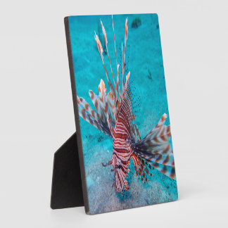 Beautiful Red Lion Fish Plaque