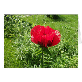 Beautiful Red Poppy Cards