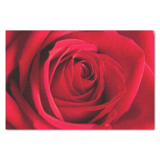 Beautiful Red Rose Flower Tissue Paper