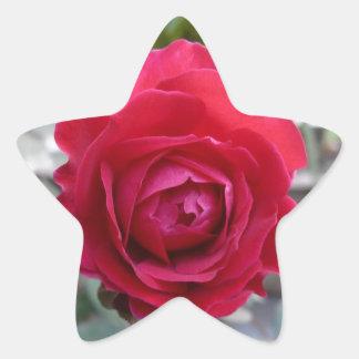 Beautiful red rose star sticker