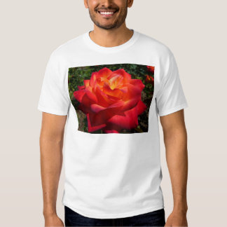 Beautiful red rose tshirt