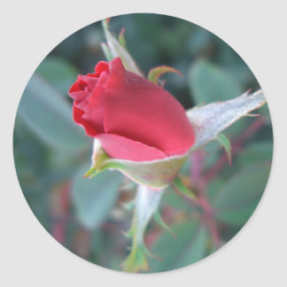 Beautiful Red Rosebud CricketDiane Roses Round Sticker