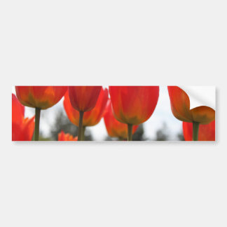 Beautiful Red Tulip Flowers. Bumper Sticker