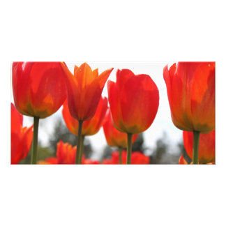 Beautiful Red Tulip Flowers Personalized Photo Card