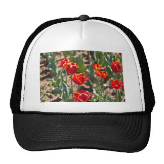 Beautiful red tulip flowers with yellow tips mesh hat
