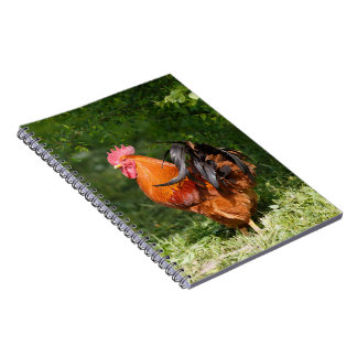 Beautiful Rooster Notebooks
