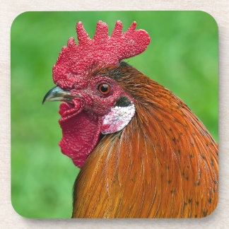 Beautiful rooster portrait drink coasters