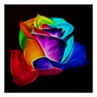Beautiful Rose of Colours 5 Poster