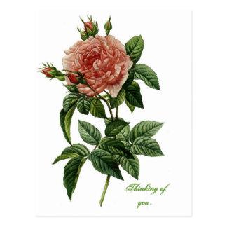 Beautiful Rose Postcard