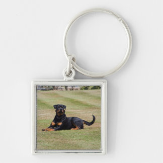 Beautiful Rottweiler dog keychain, gift idea Key Ring