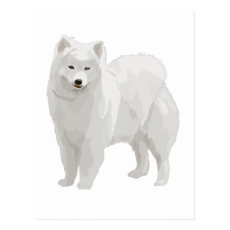 Beautiful Samoyed Postcard