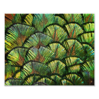 Beautiful Scalloped Peacock Feathers Photographic Print