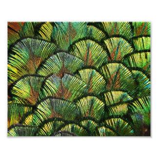 Beautiful Scalloped Peacock Feathers Photo Art