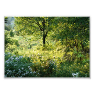 Beautiful Scene 7x5 Photographic Print