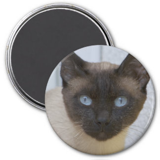 Beautiful Seal Point Siamese Cat Magnet