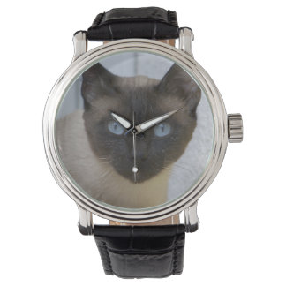 Beautiful Seal Point Siamese Cat Watch