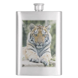 Beautiful siberian tiger lying down hip flask