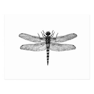 Beautiful & Simple Vintage Dragonfly Postcard