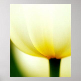 Beautiful Single Tulip Poster
