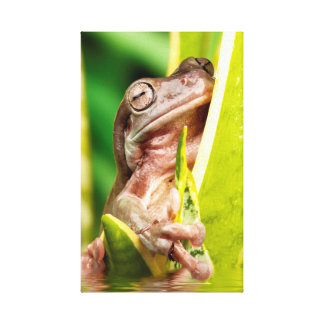 Beautiful small frog on a plant in water canvas print